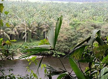 Centro Científico Río Palenque