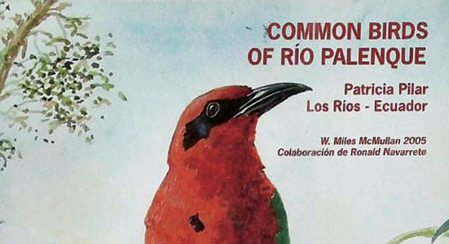 Common Birds Of Río Palenque